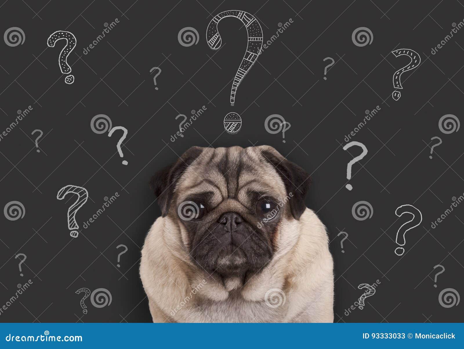 Perro de perrito del barro amasado que se sienta delante de muestra de la pizarra con los signos de interrogación dibujados mano