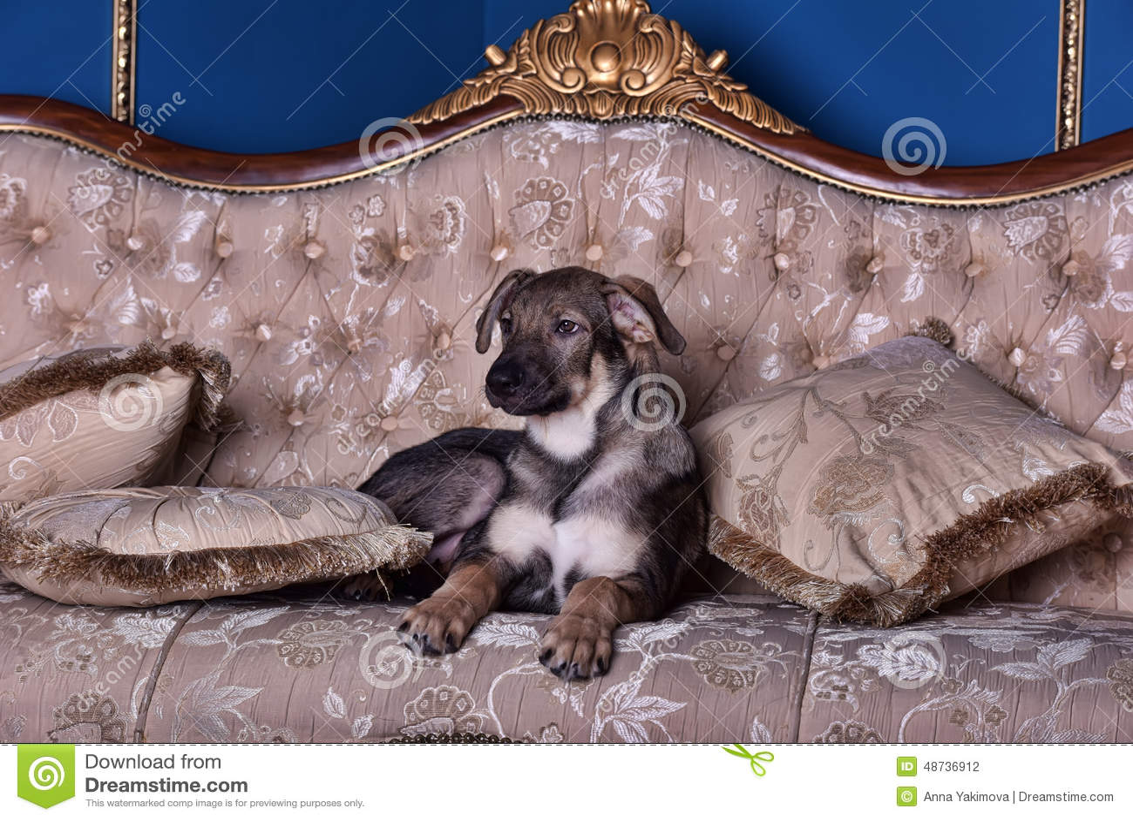 Perro de perrito en el sofá