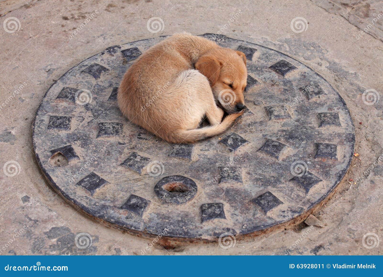 Perro de perrito en la cubierta de la alcantarilla