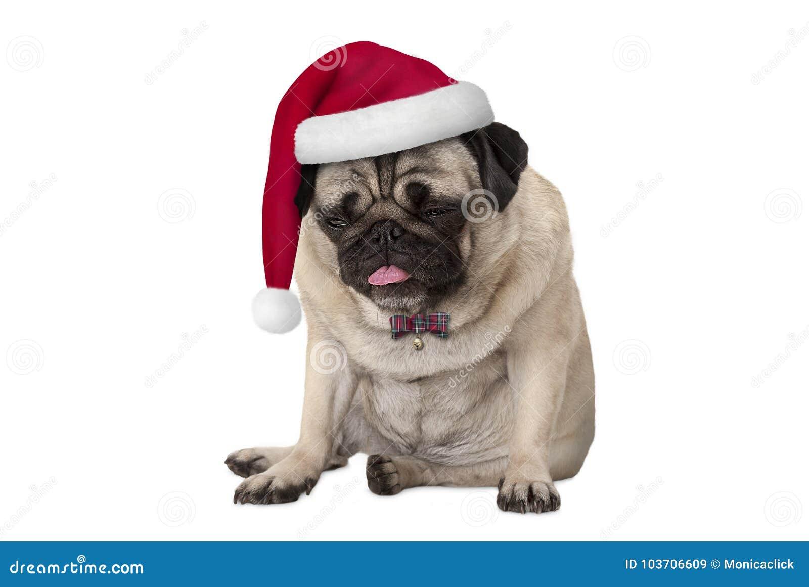 Perro de perrito hecho frente gruñón divertido del barro amasado con el sombrero rojo de santa para la Navidad que se sienta
