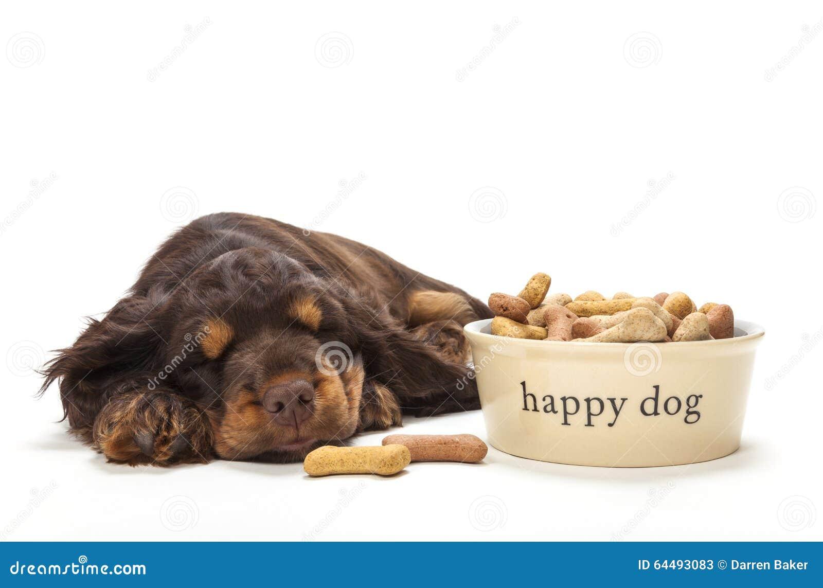 Perro de perrito lindo de cocker spaniel que duerme por el cuenco de galletas