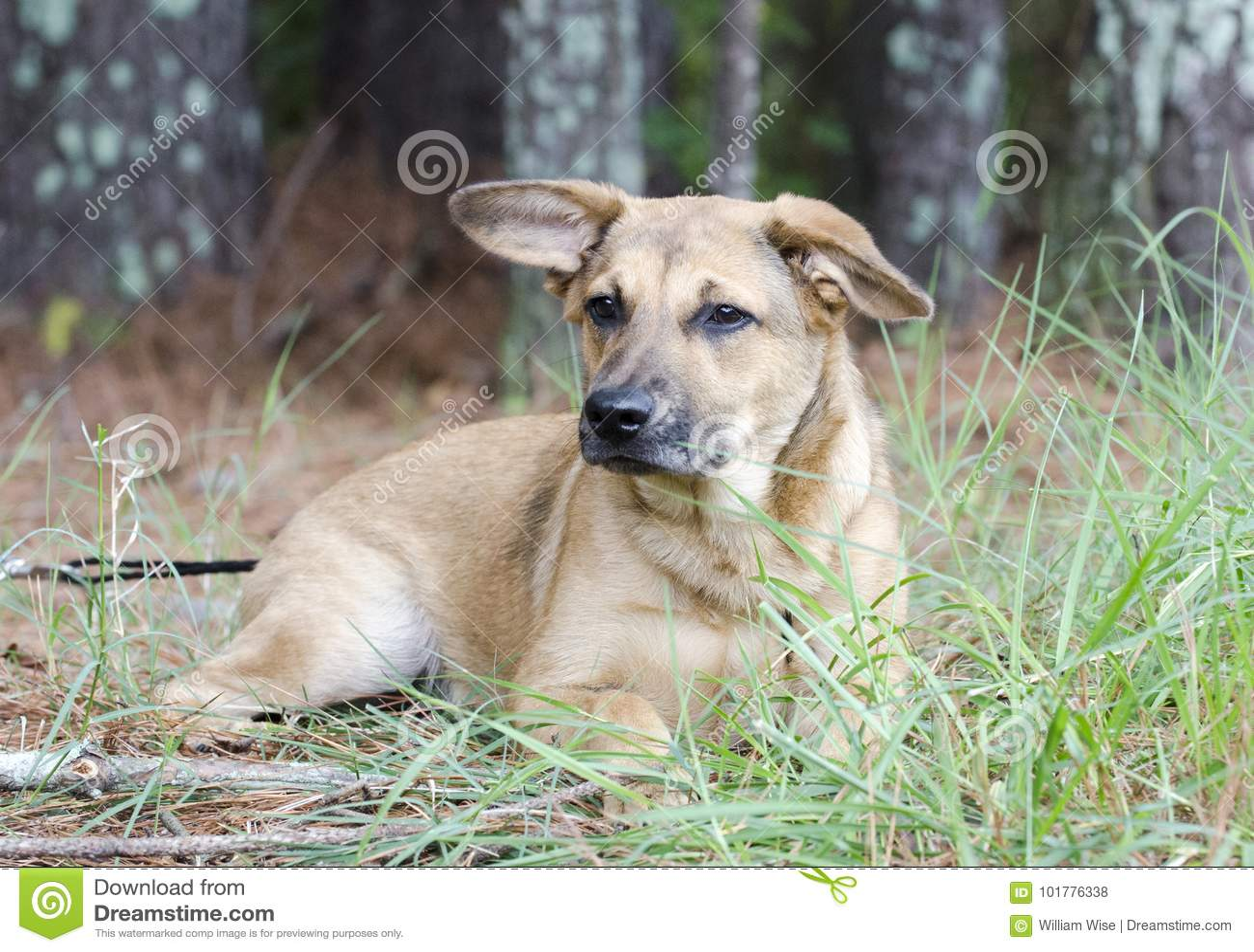 Perro de perrito mezclado pastor del perro callejero de la raza