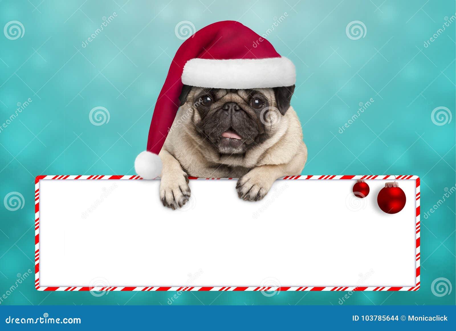 Perro de perrito sonriente lindo del barro amasado de la Navidad con el sombrero de santa, colgando con las patas en muestra en b