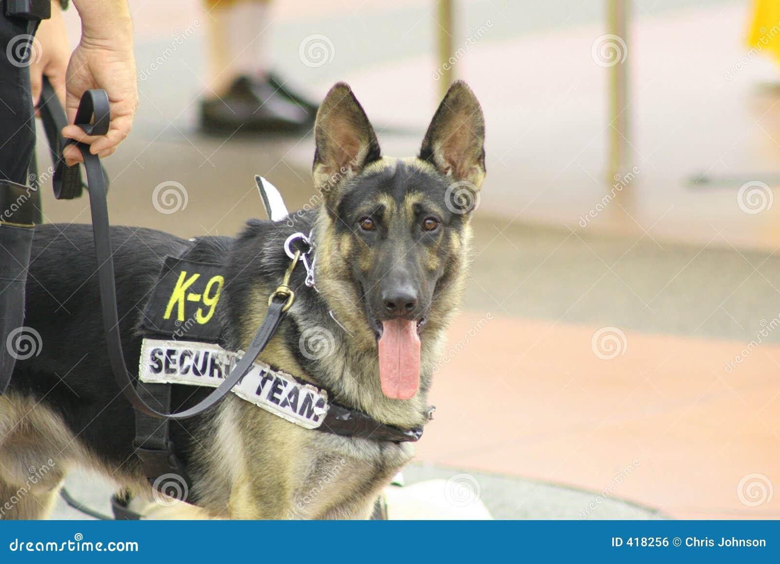 Perro de policía