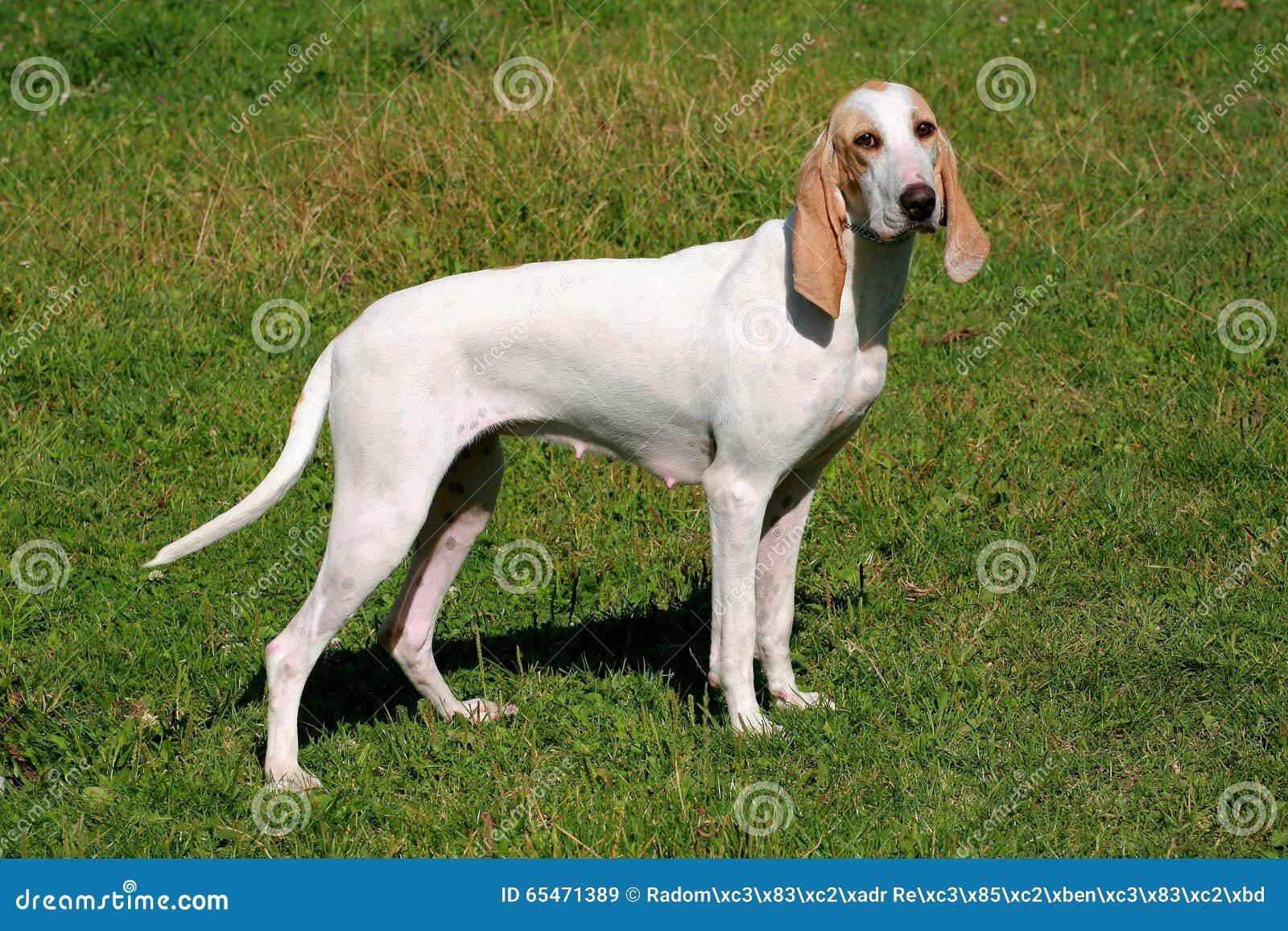 Perro de porcelaine en el jard n de la primavera foto de - Jardin para perros ...