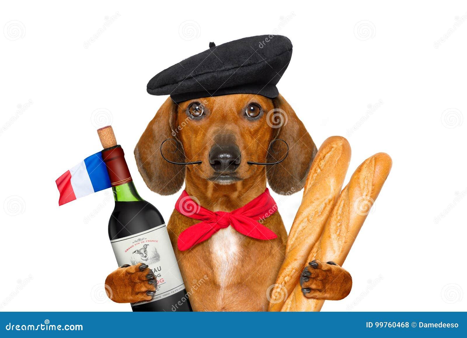 Perro de salchicha francés