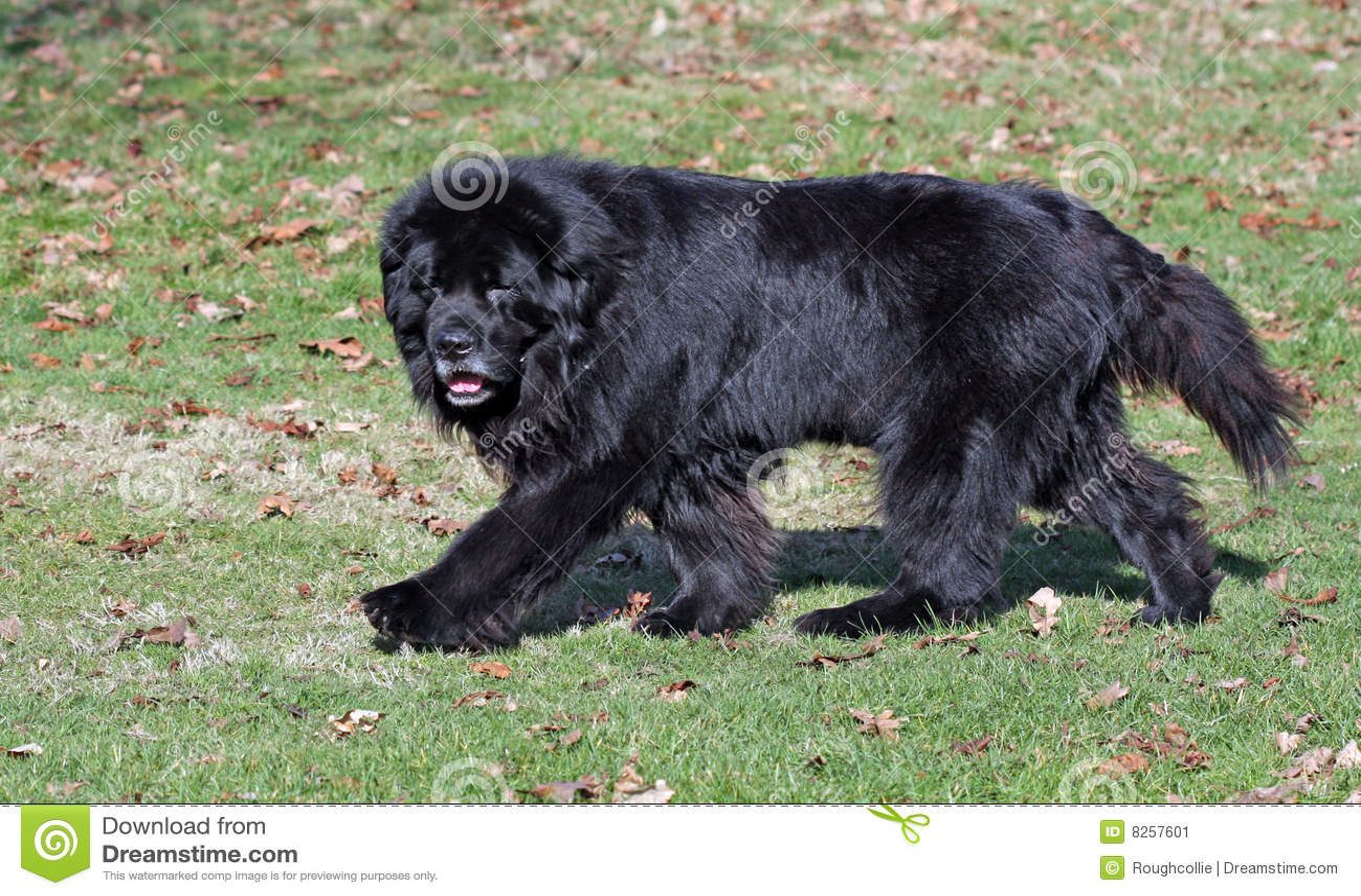Dog Walking Newfoundland