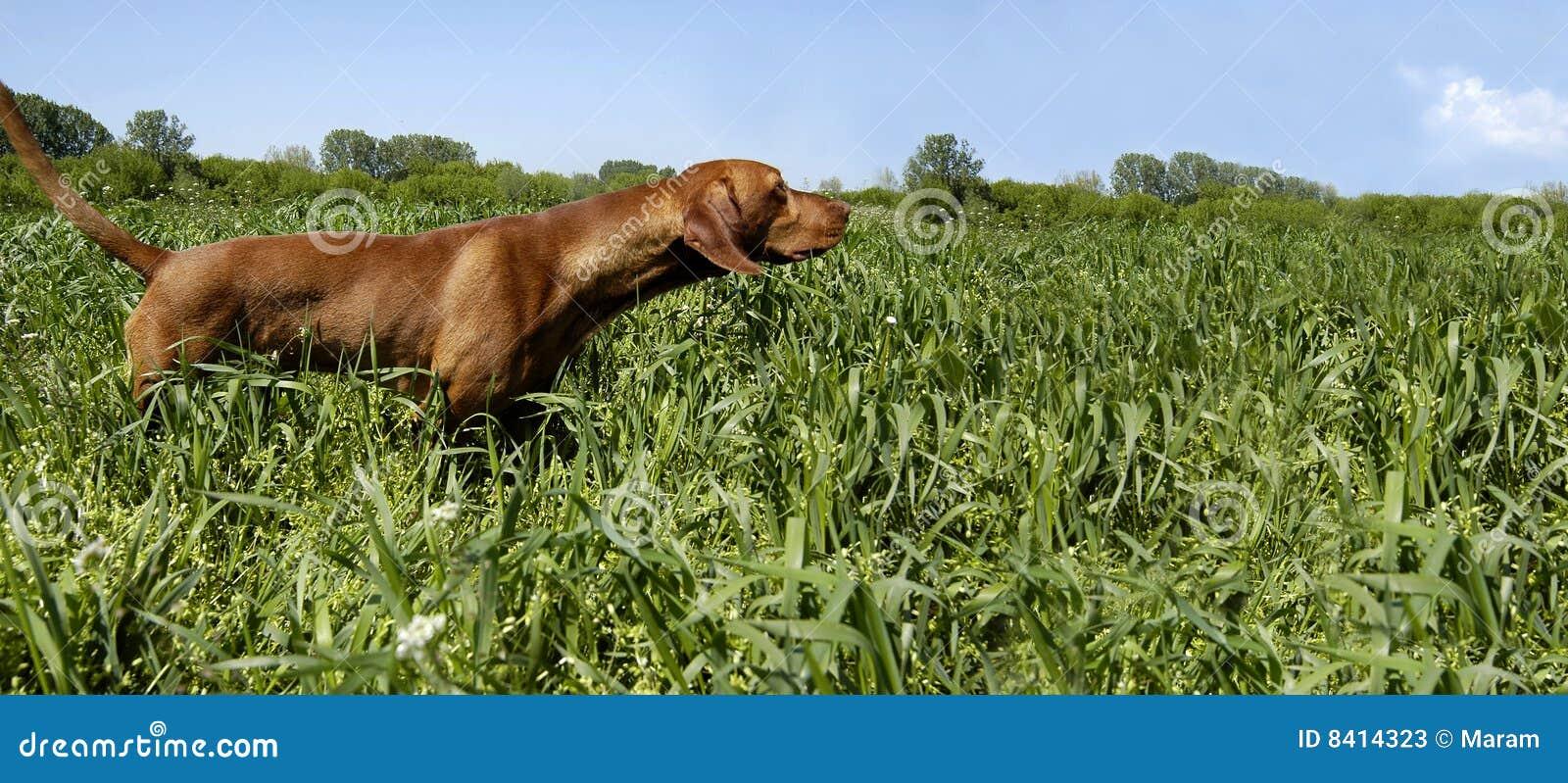 Perro del cazador