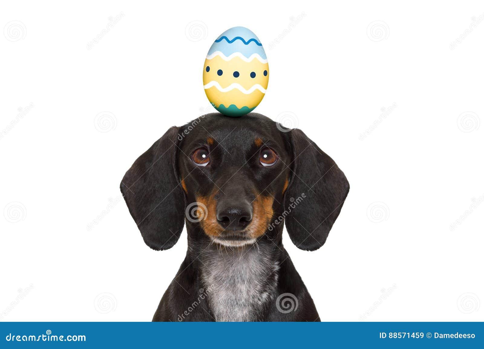 huevo cabeza perro