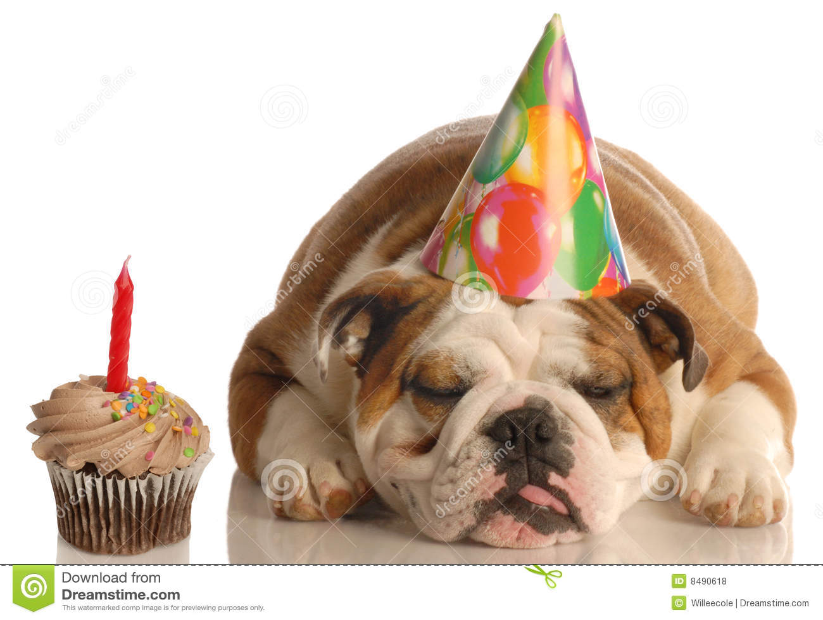 Perro del cumpleaños