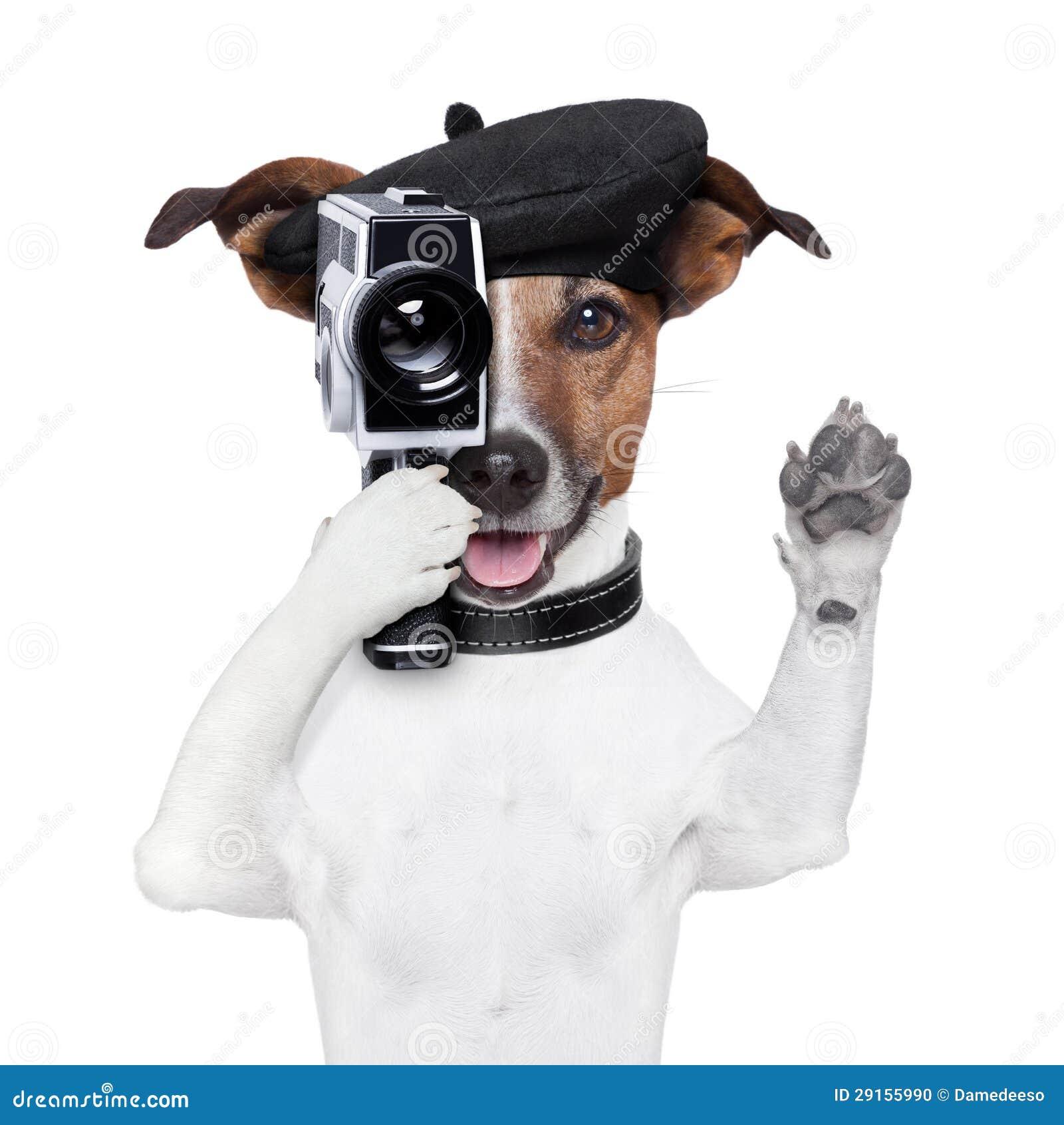 Perro del director de película