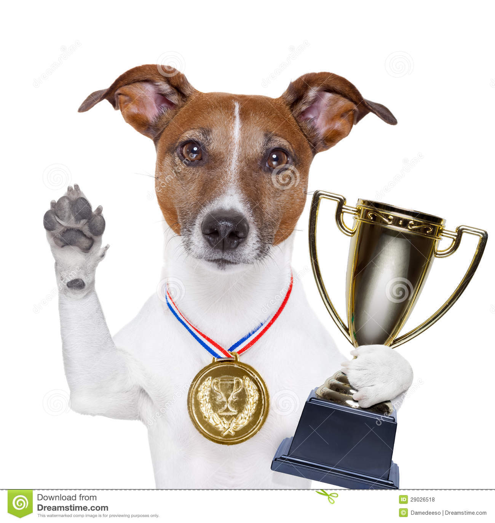 Perro del ganador