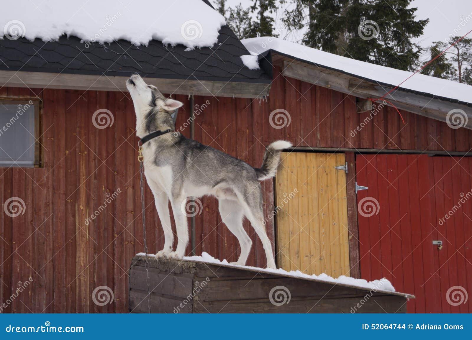 Perro del grito