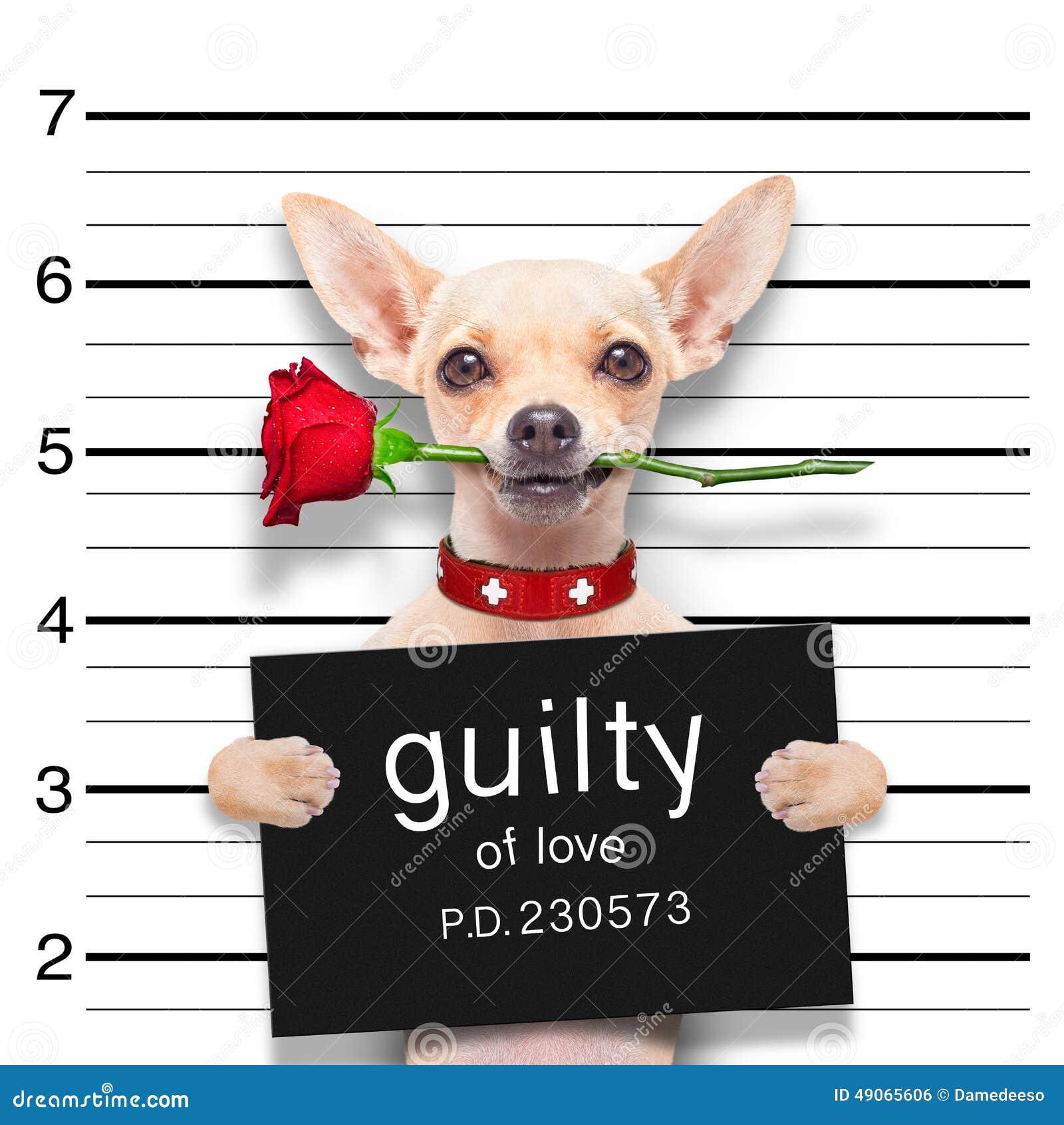 Perro del mugshot de las tarjetas del día de San Valentín