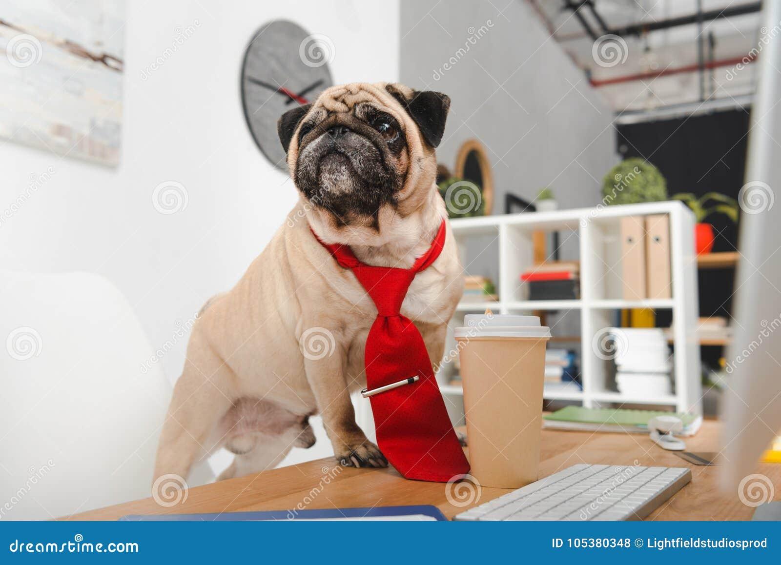 Perro del negocio
