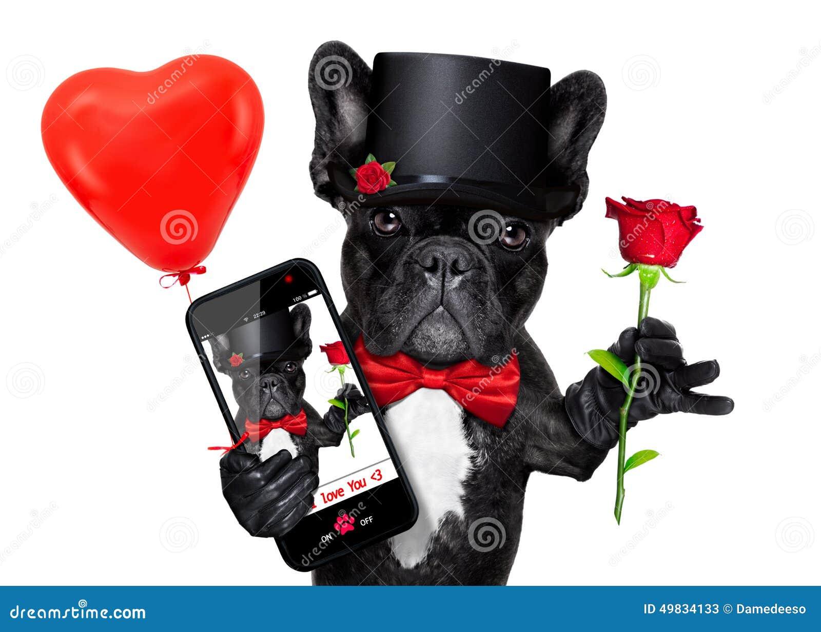 Perro del selfie de las tarjetas del día de San Valentín