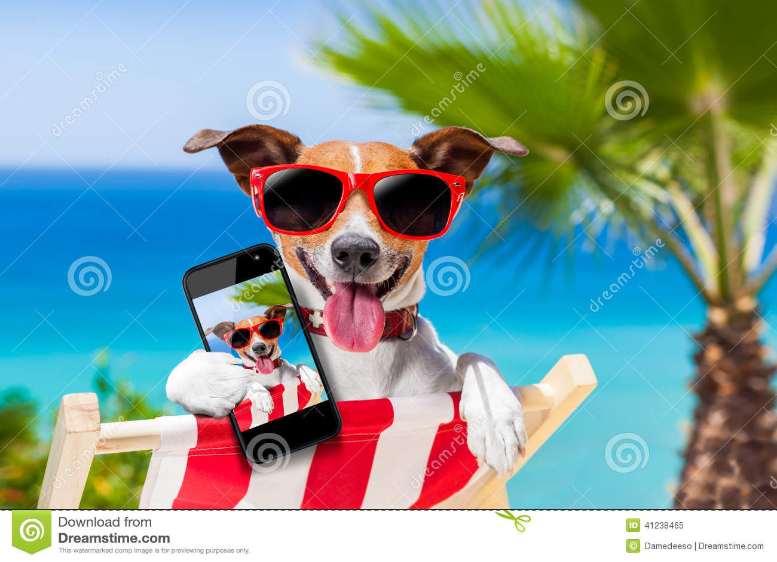 Perro del selfie del verano