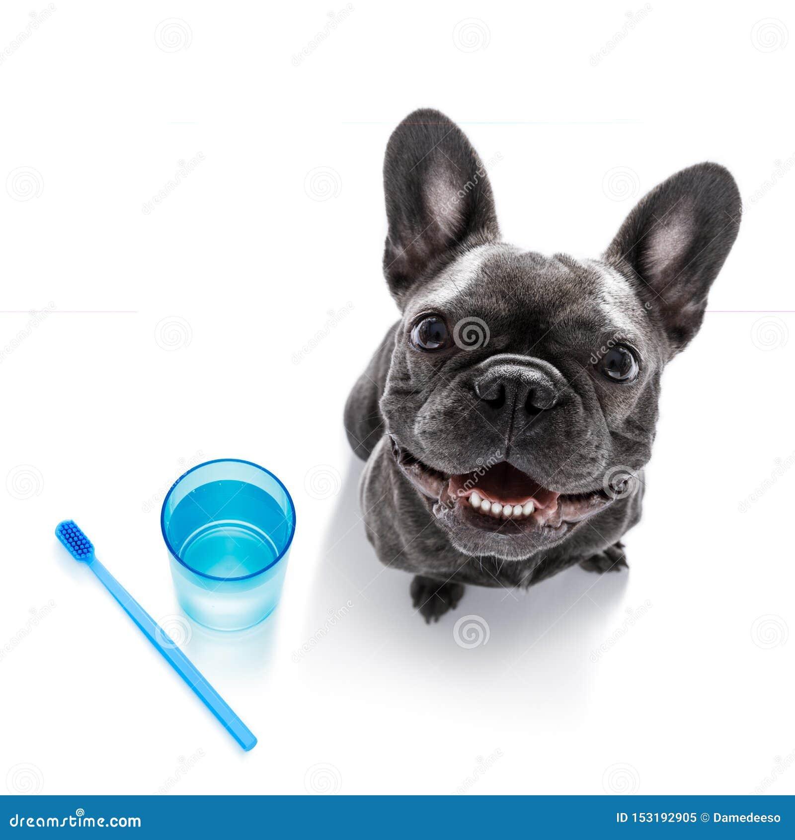 Perro dental del cepillo de dientes
