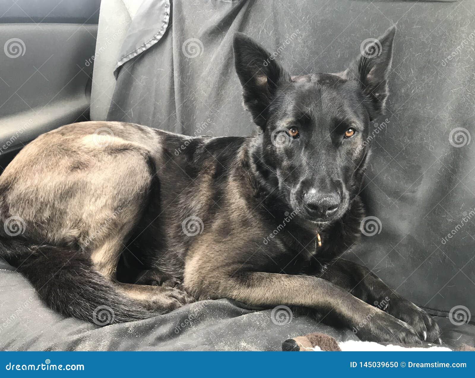 Perro después de un playdate de la playa