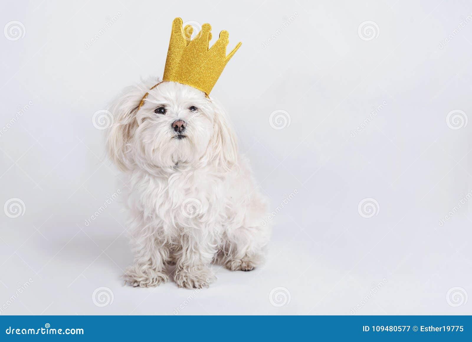 Perro divertido con la corona