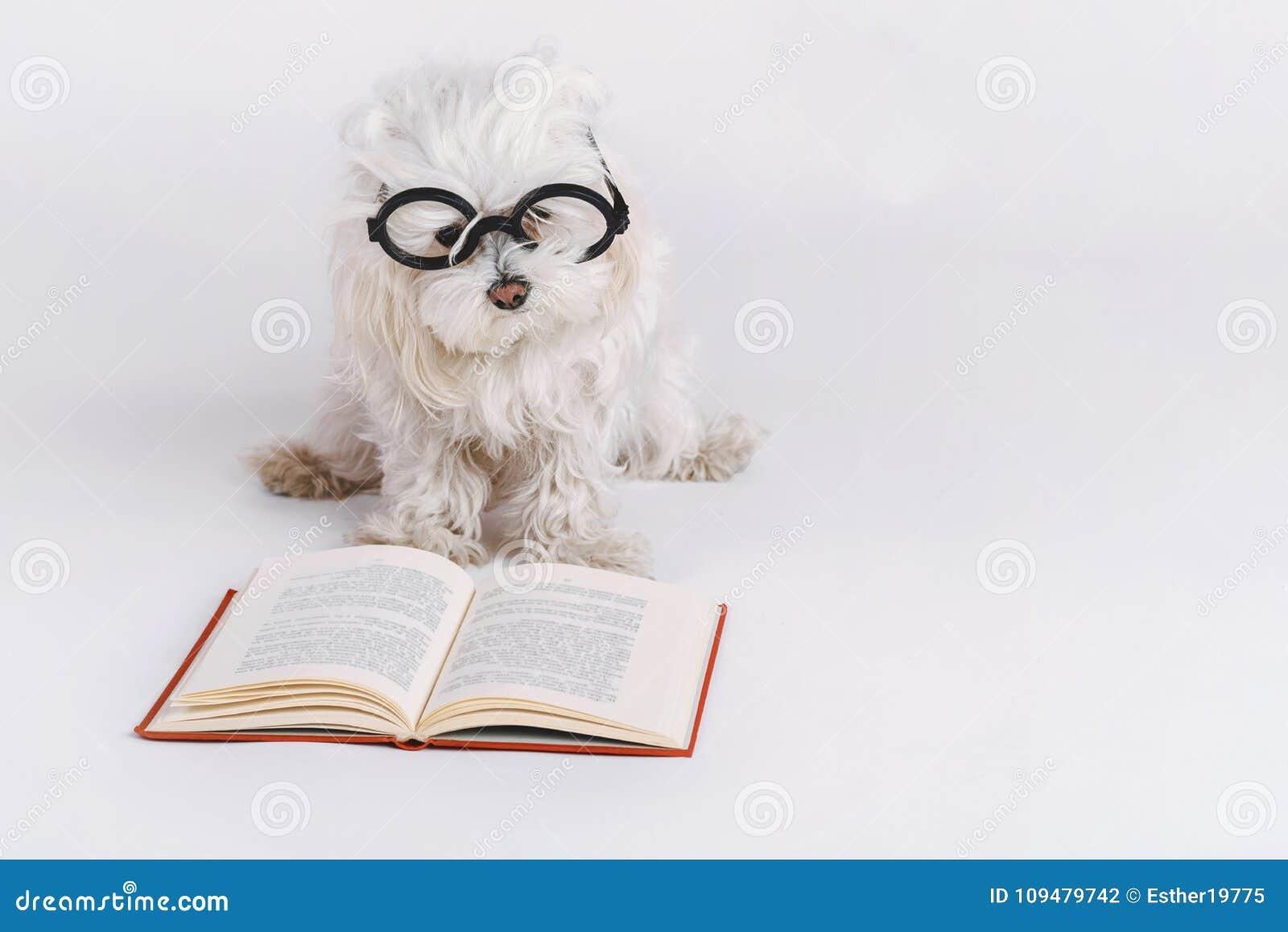 Perro divertido con vidrios y un libro