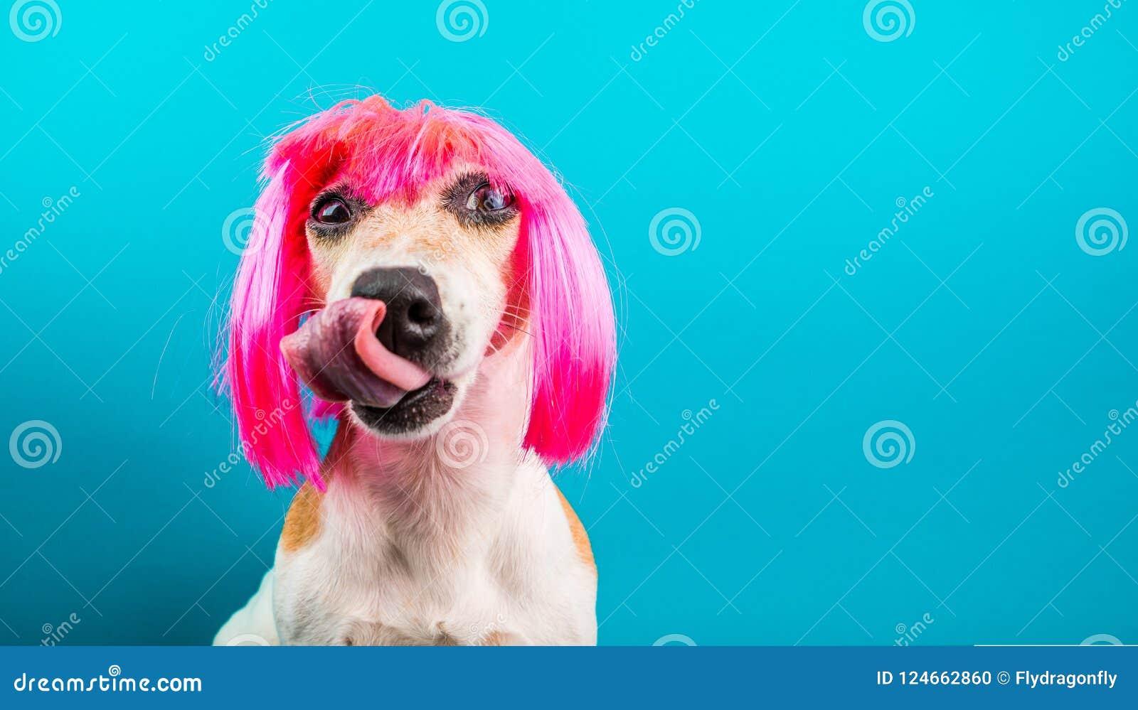 Perro divertido en peluca rosada esperar una lamedura deliciosa del foog de la comida Fondo para una tarjeta de la invitación o u