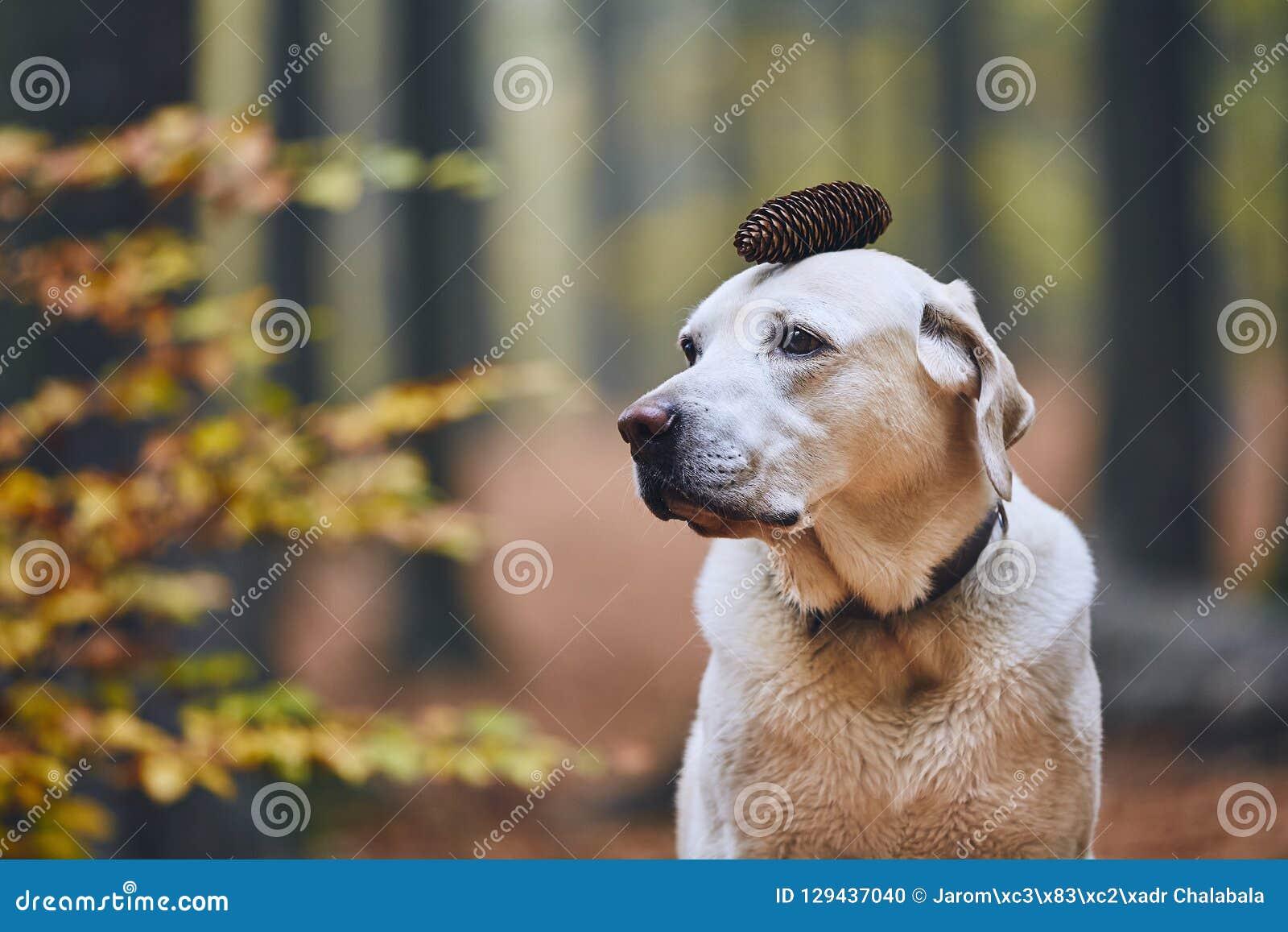 Perro en bosque del otoño