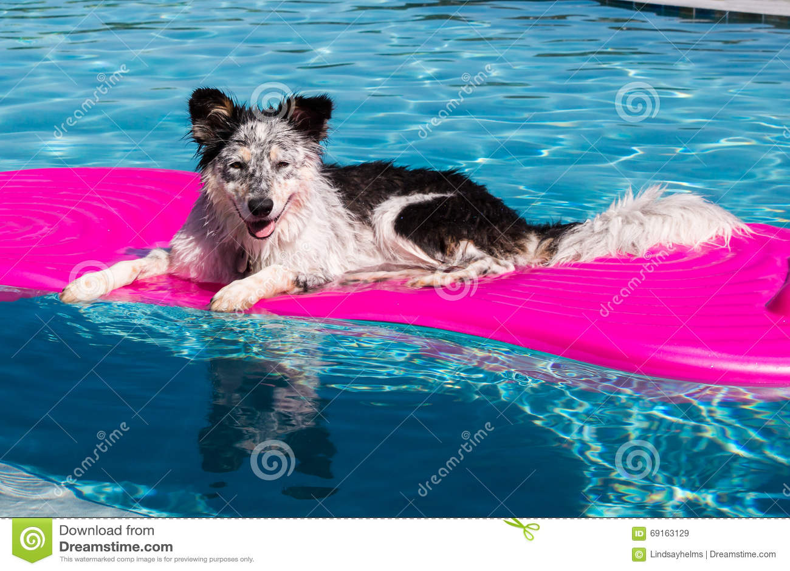 Perro en el flotador de la piscina