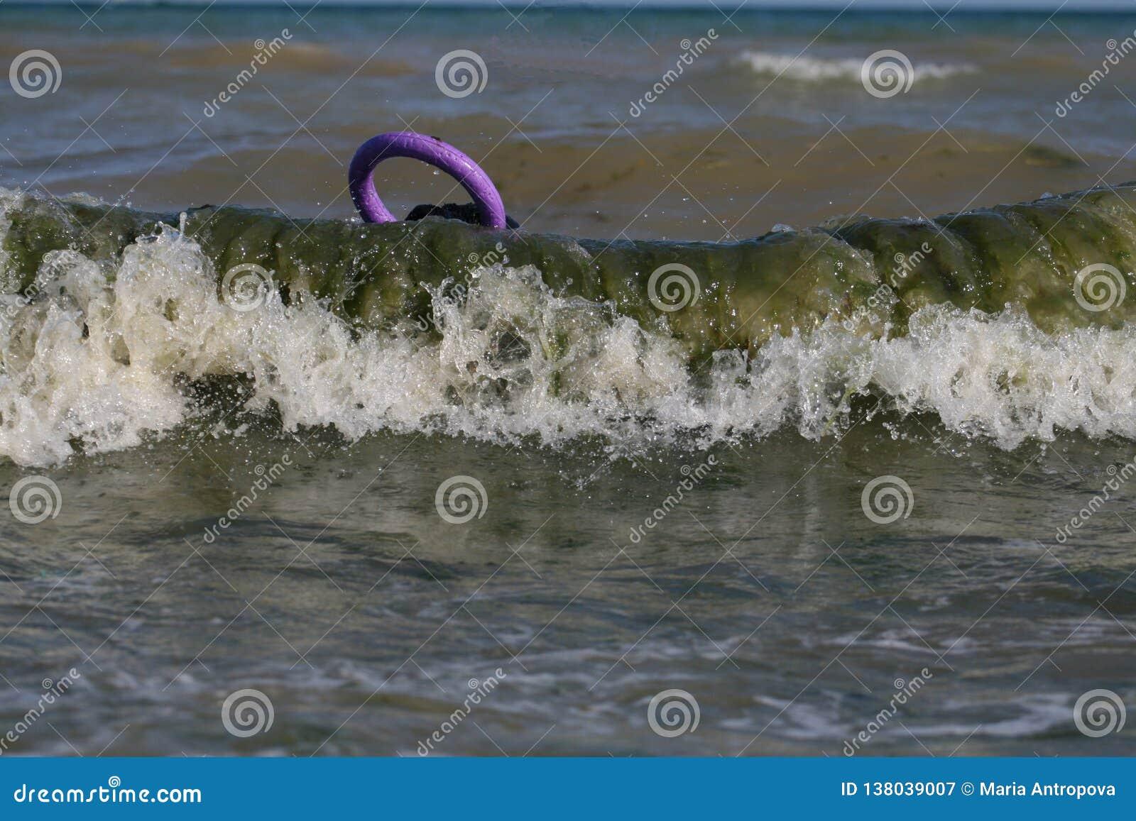 Perro en el Mar Negro con el tirador Schnauzer gigante
