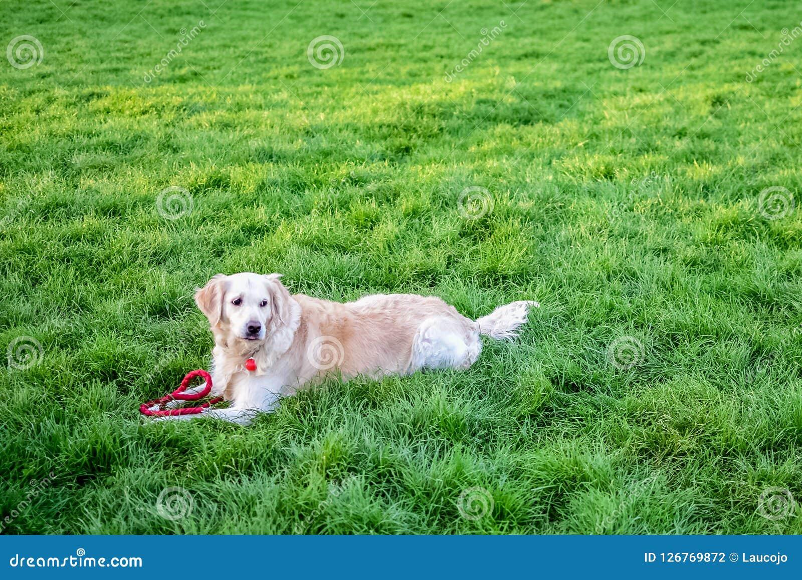 Perro en el parque en la hierba