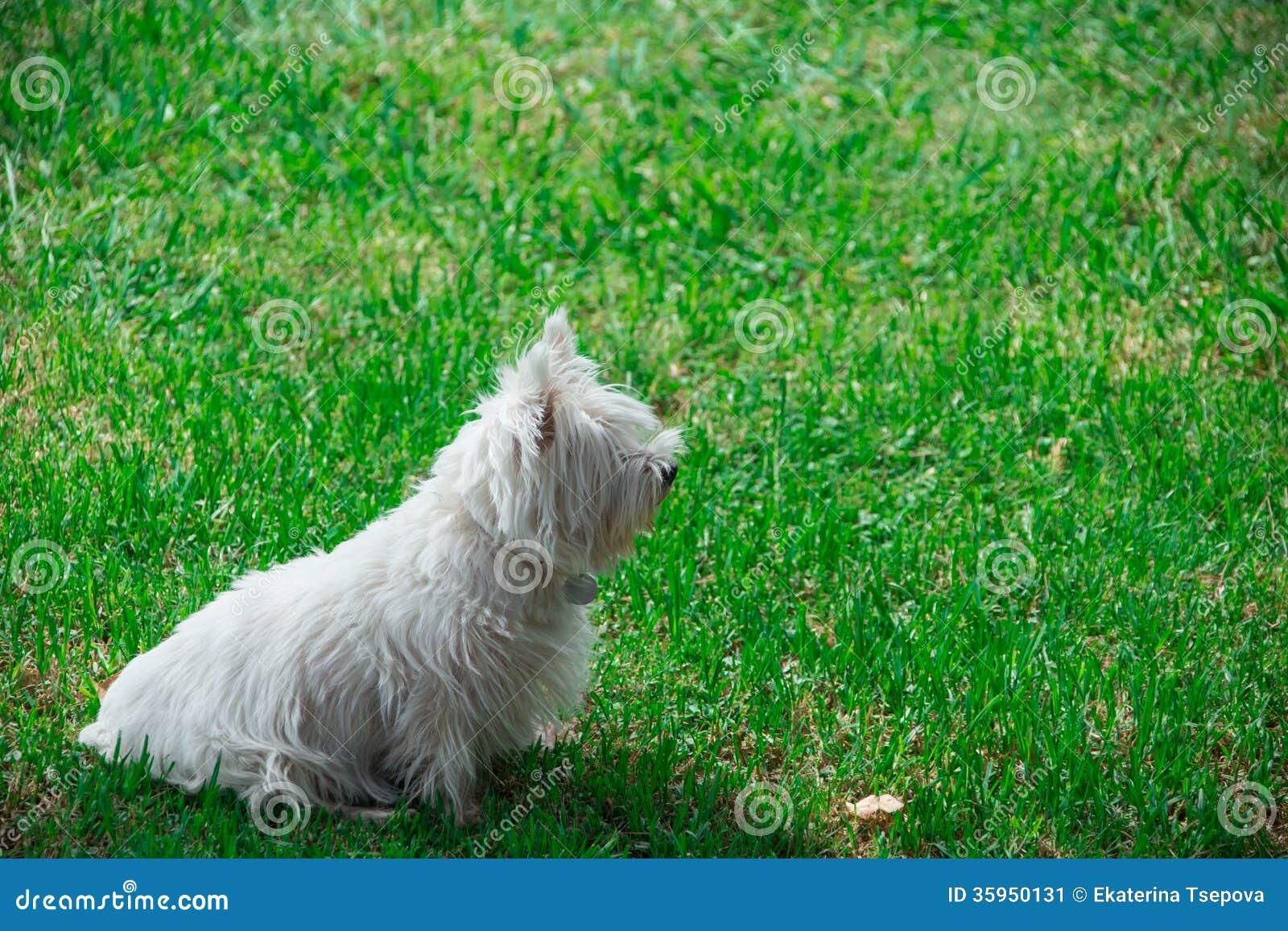 Perro en hierba