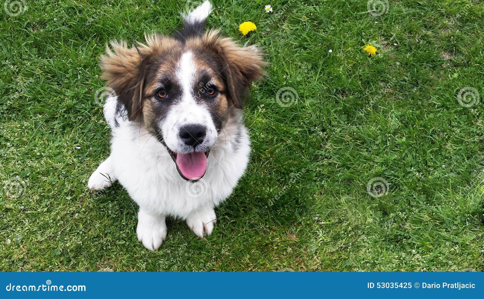 Perro en la hierba