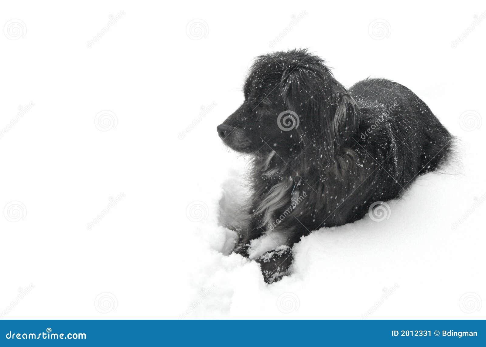 Perro en la nieve que mira a la izquierda