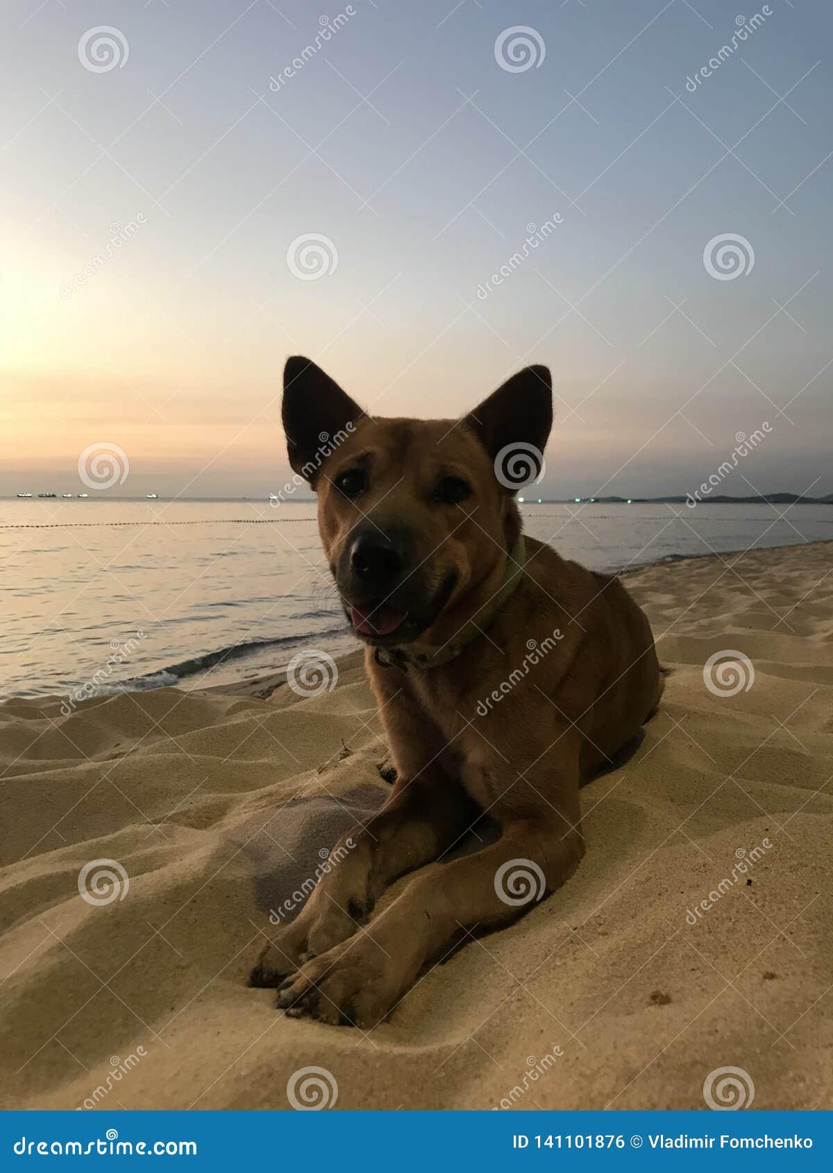 Perro en la playa en la puesta del sol