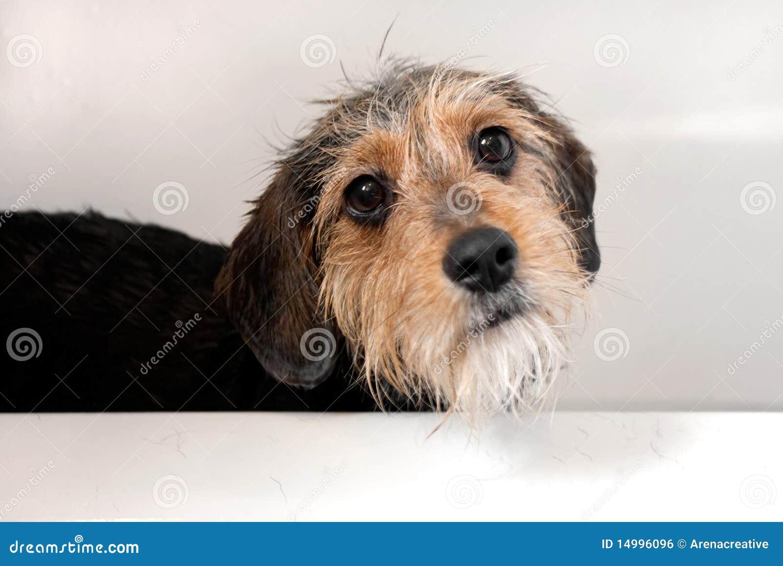 Perro en la tina de baño