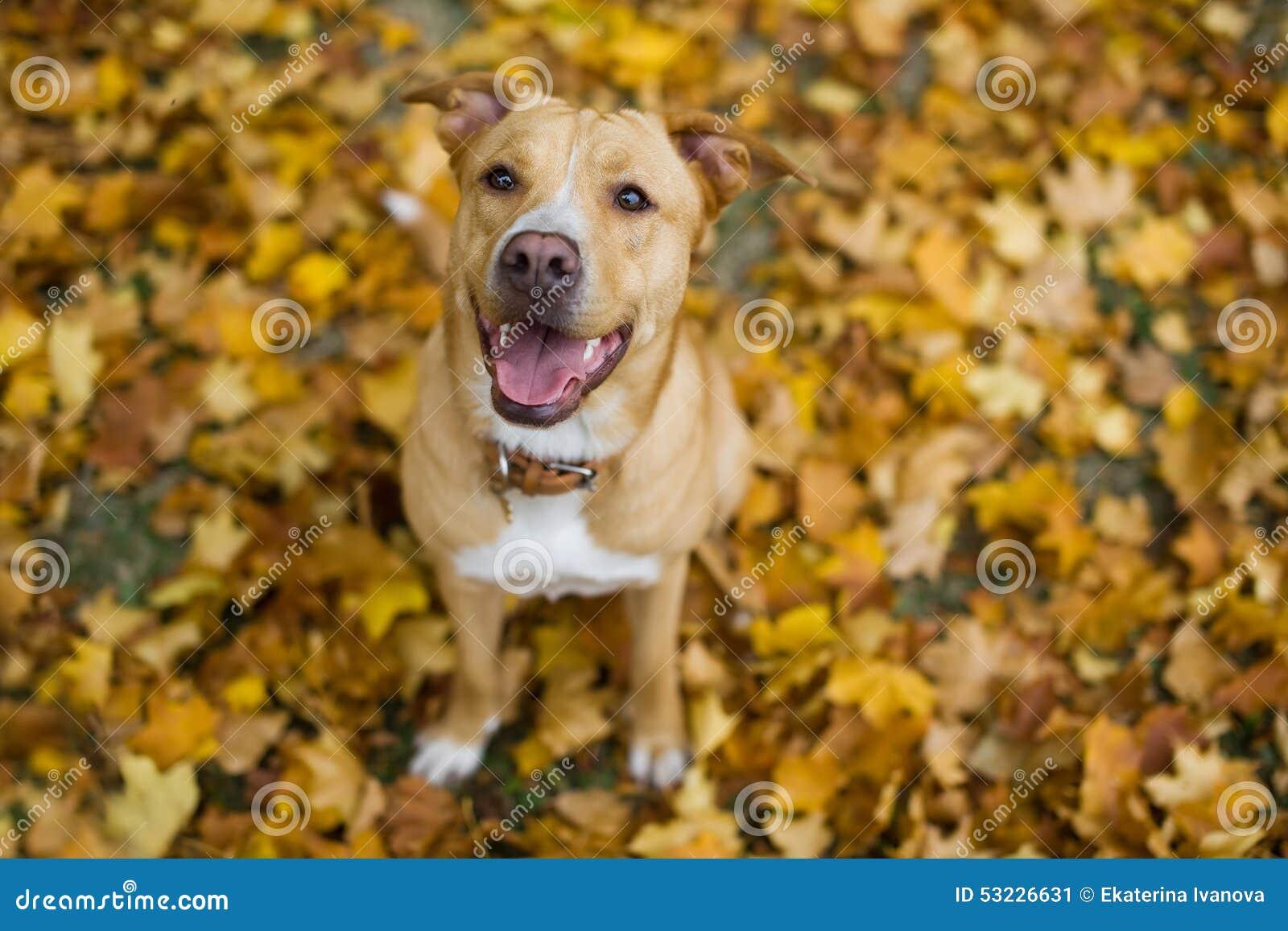 Perro en las hojas amarillas