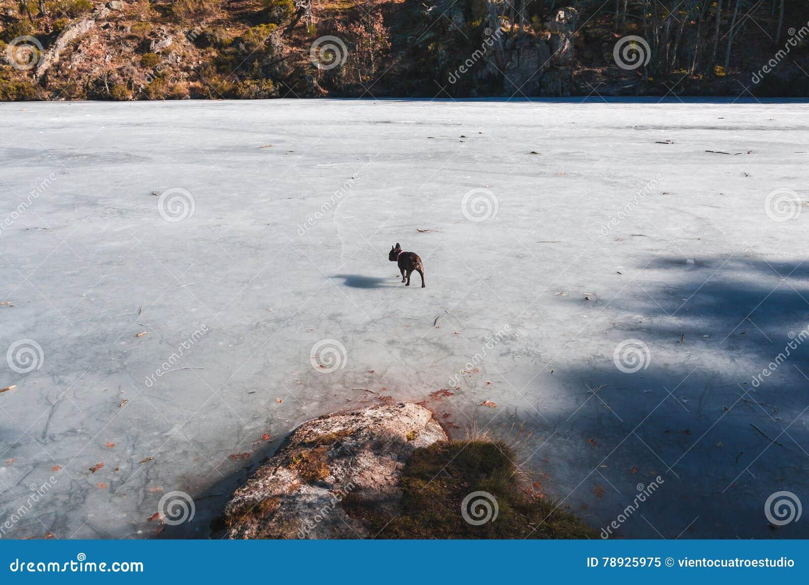 Perro en un lago congelado
