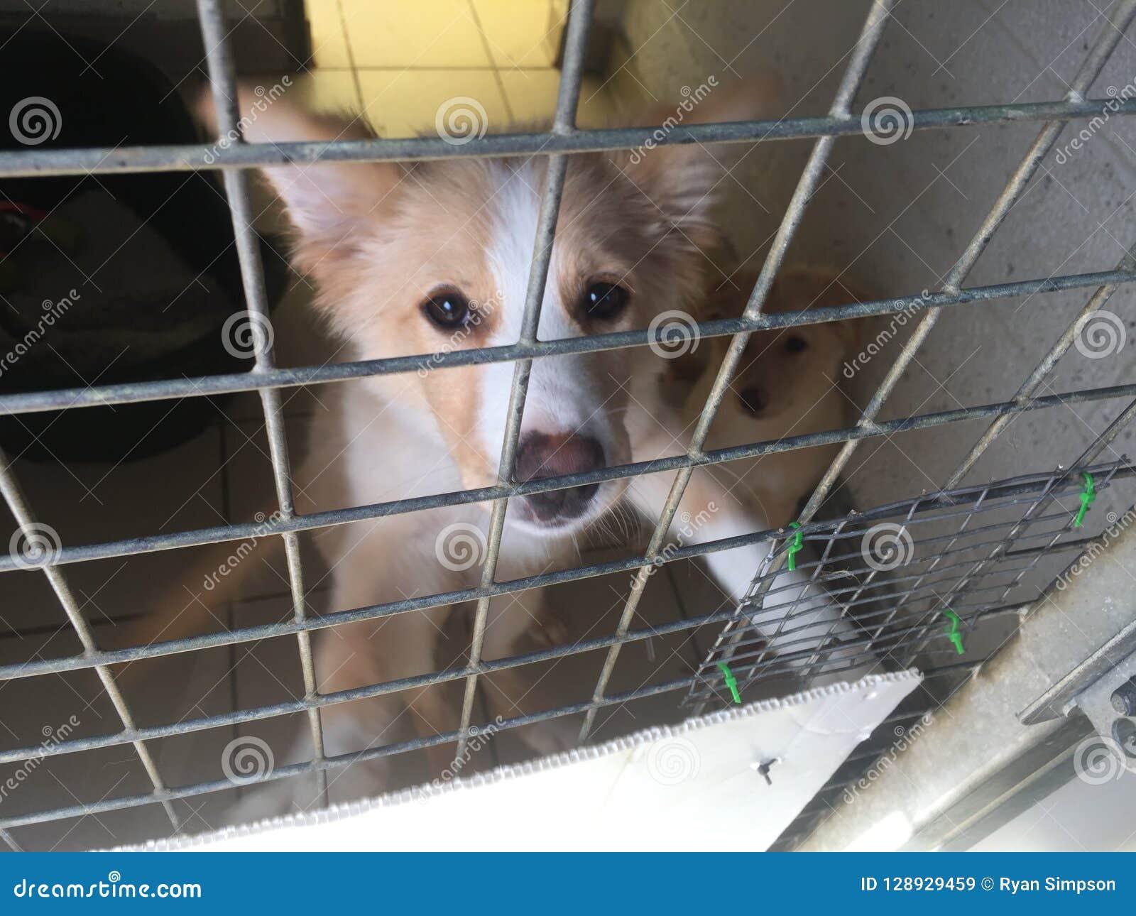 Perro en un refugio del rescate en una jaula