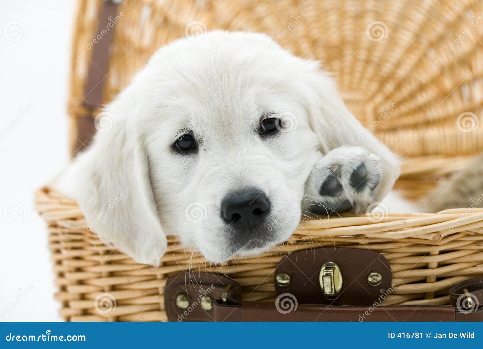 Perro en una cesta