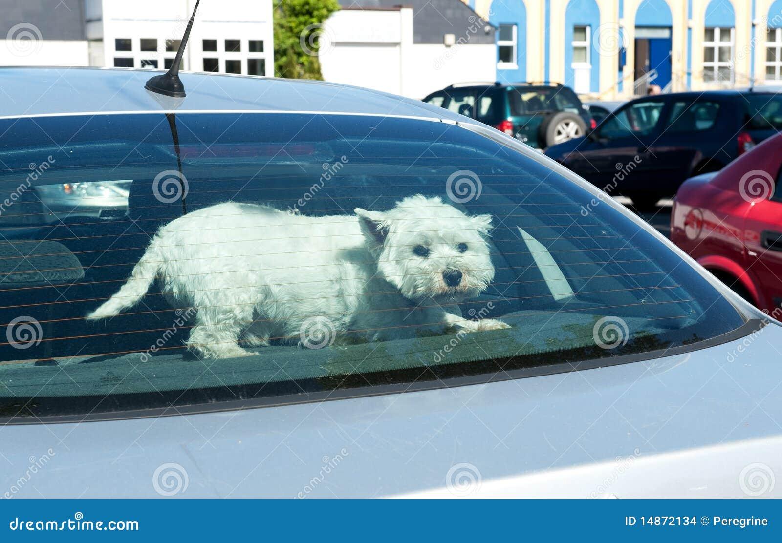 Perro en una ventana trasera del coche