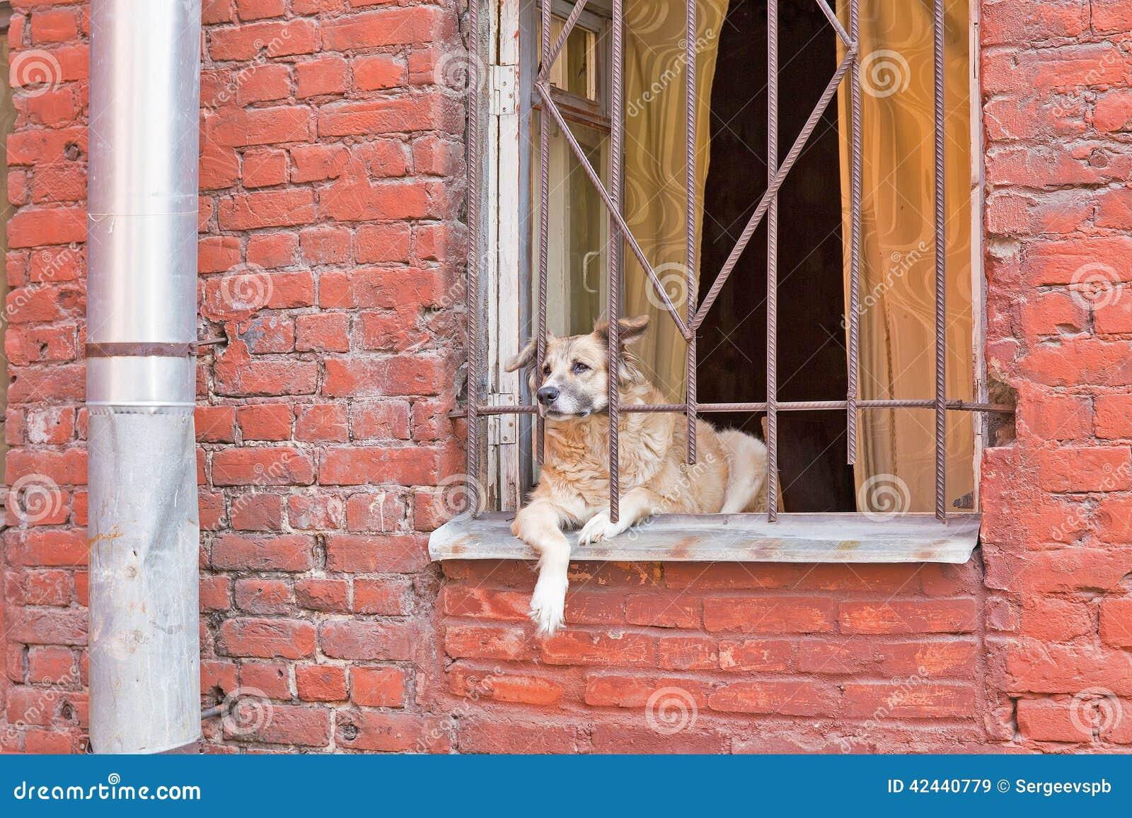 Perro en ventana