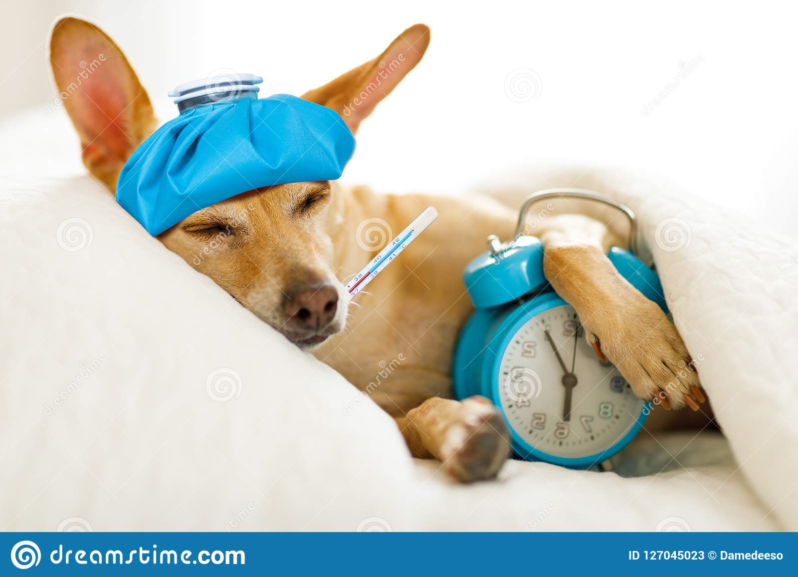 Perro enfermo o enfermo en cama