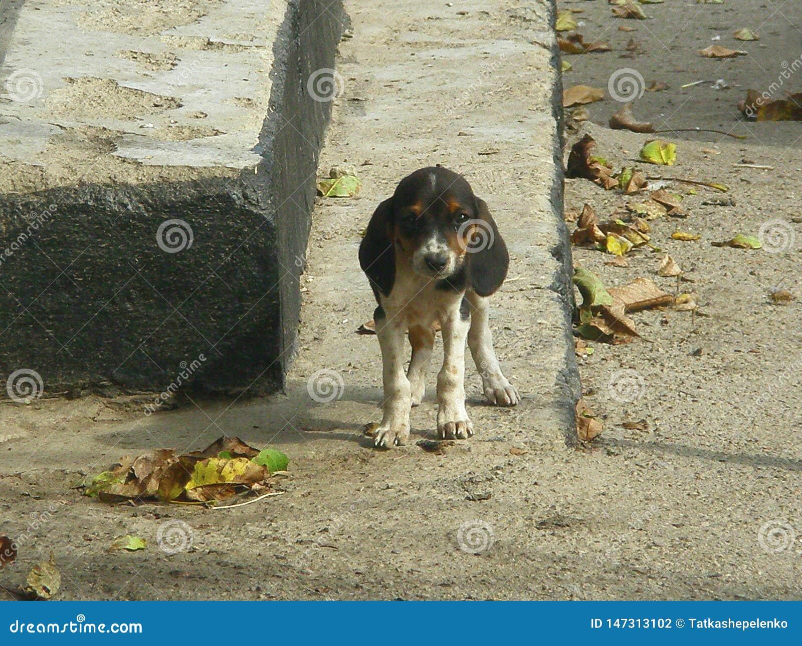 Perro excelente en la caída en los pasos