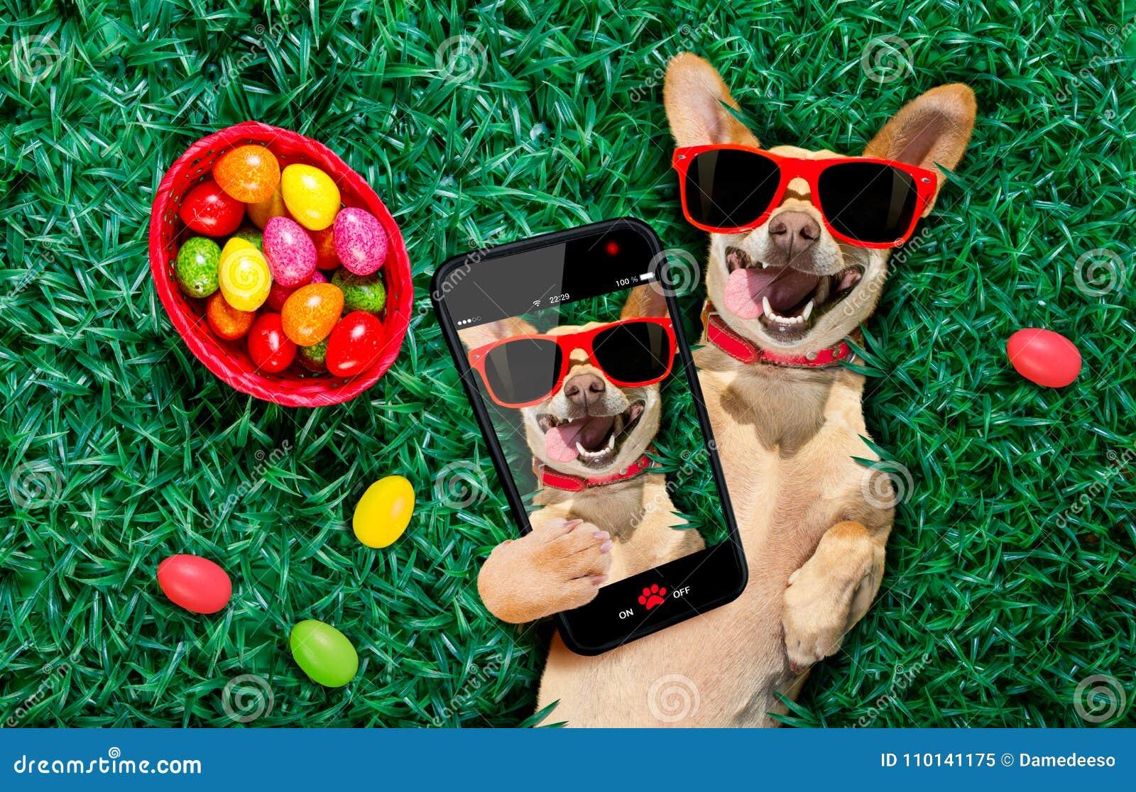 Perro feliz de pascua con los huevos