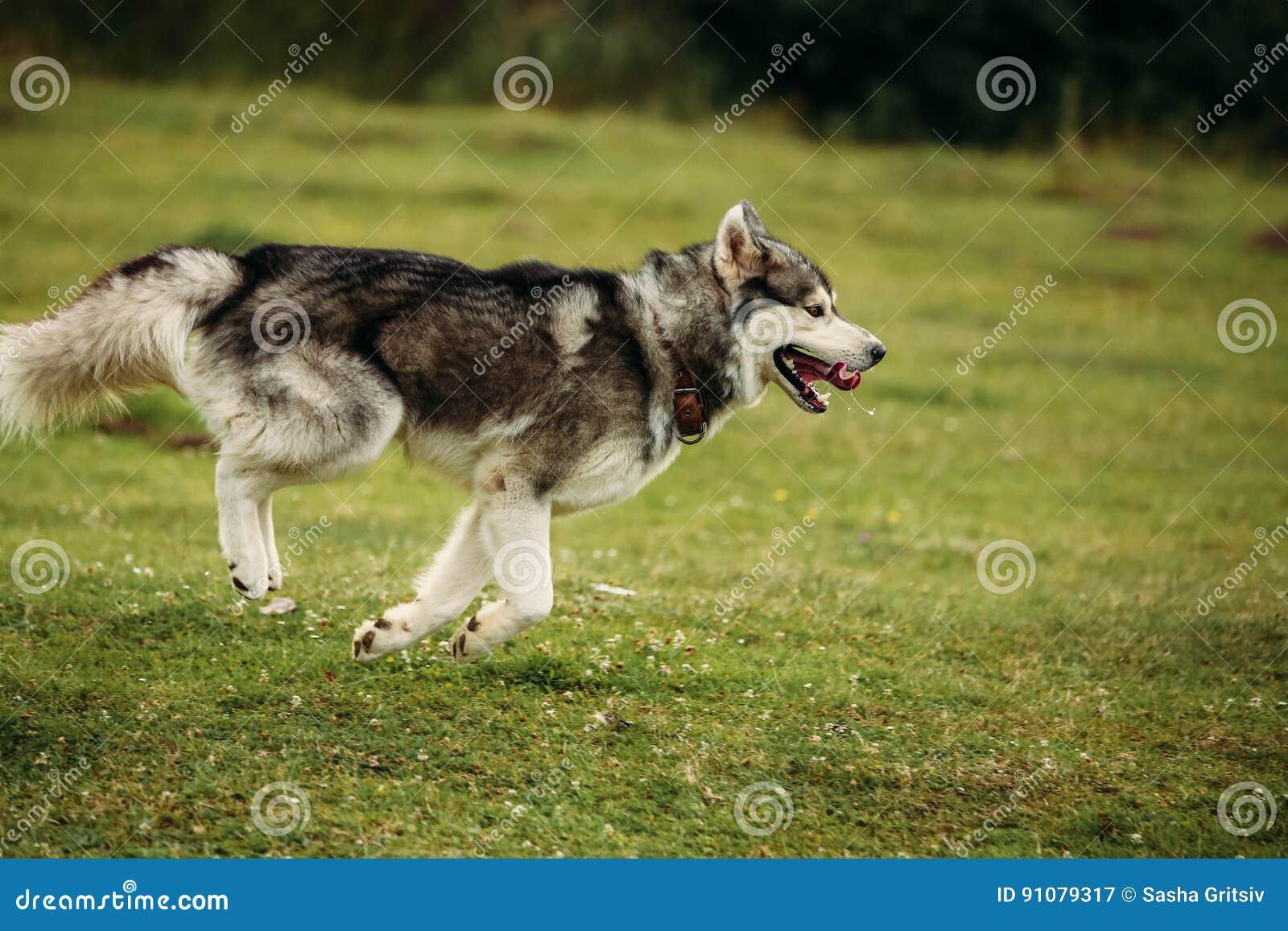 Perro fornido que corre al aire libre hospitalidad Río Perro joven que se sienta en la hierba afuera