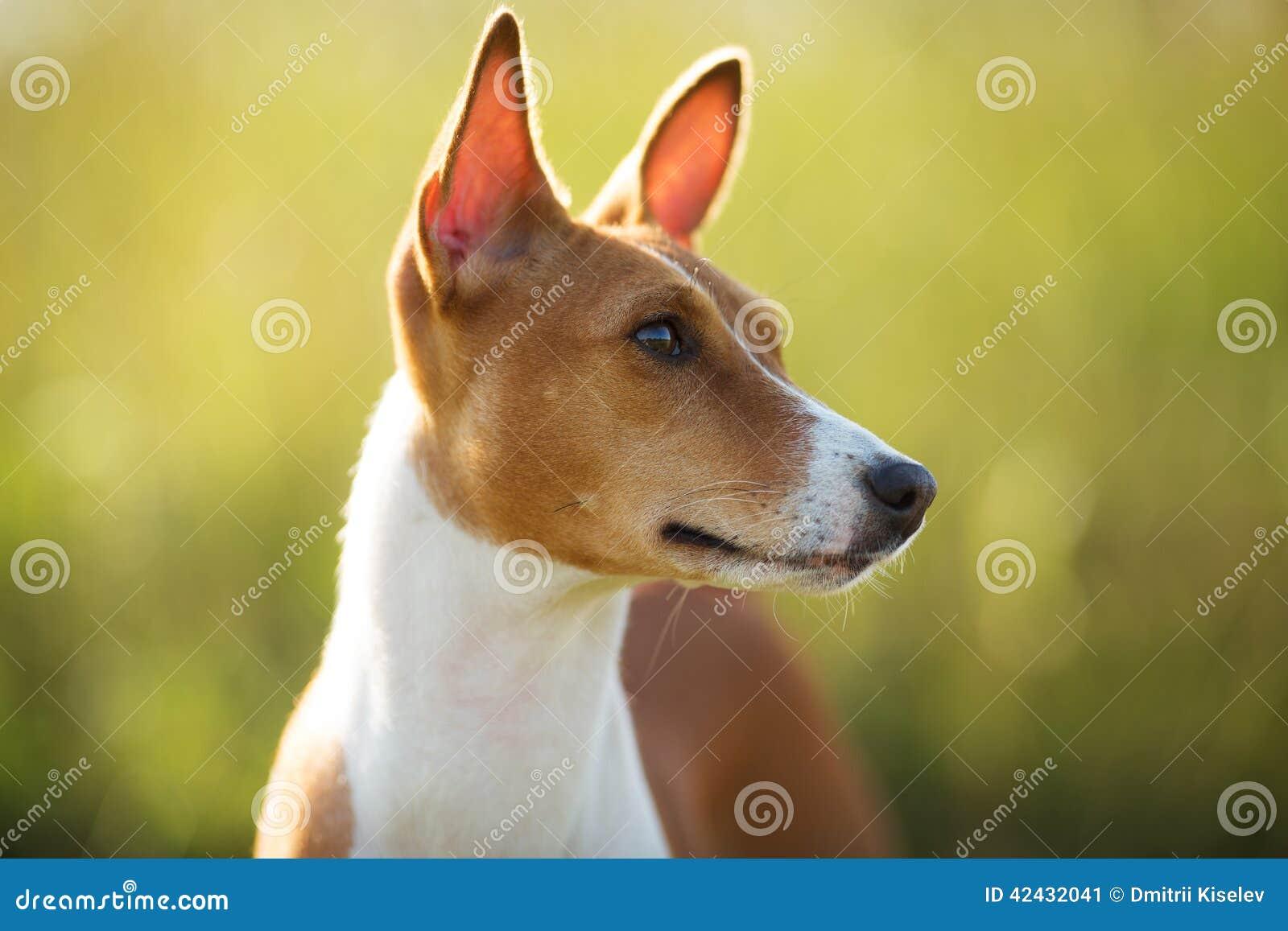 Perro fotografiado del rojo del bozal del primer