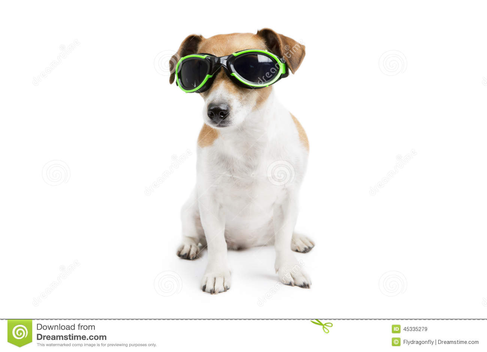 Perro fresco con los vidrios