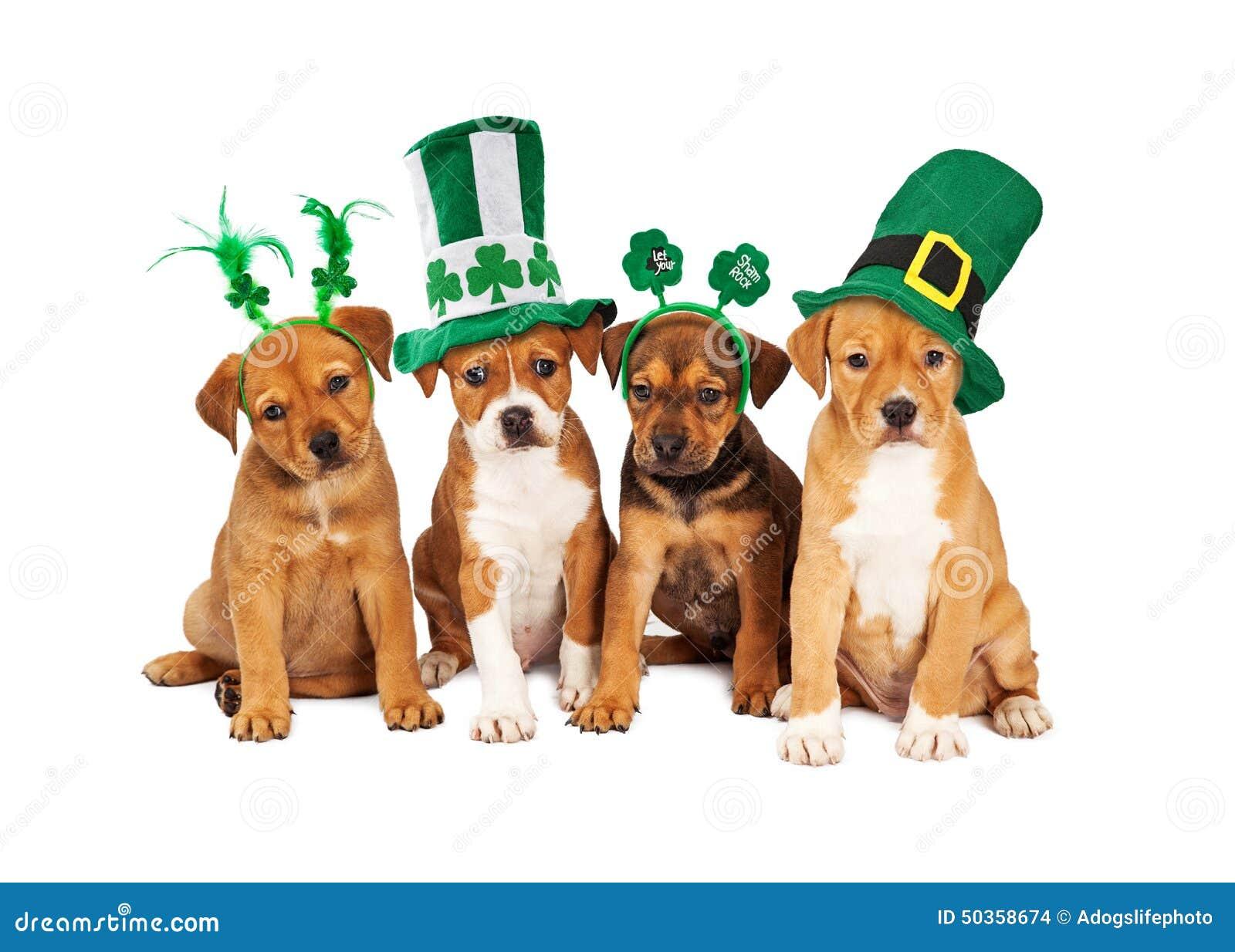 Perro grande del día del St Patricks