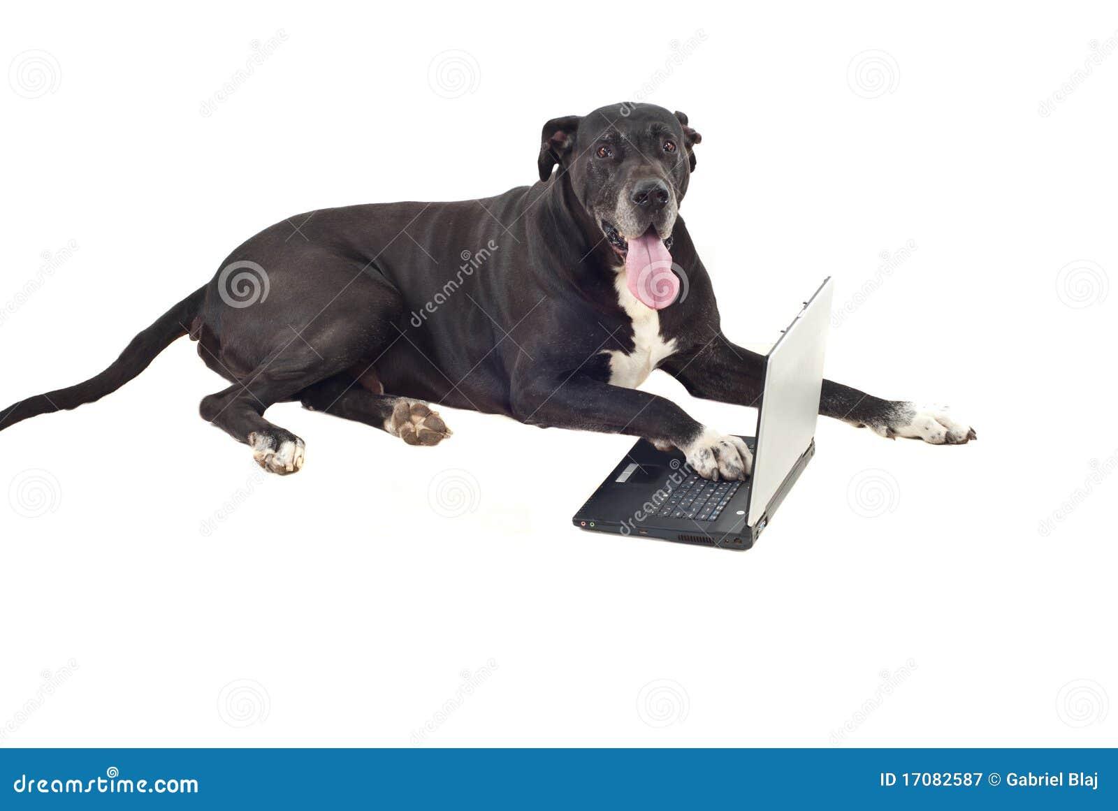 Perro grande lindo con la computadora portátil