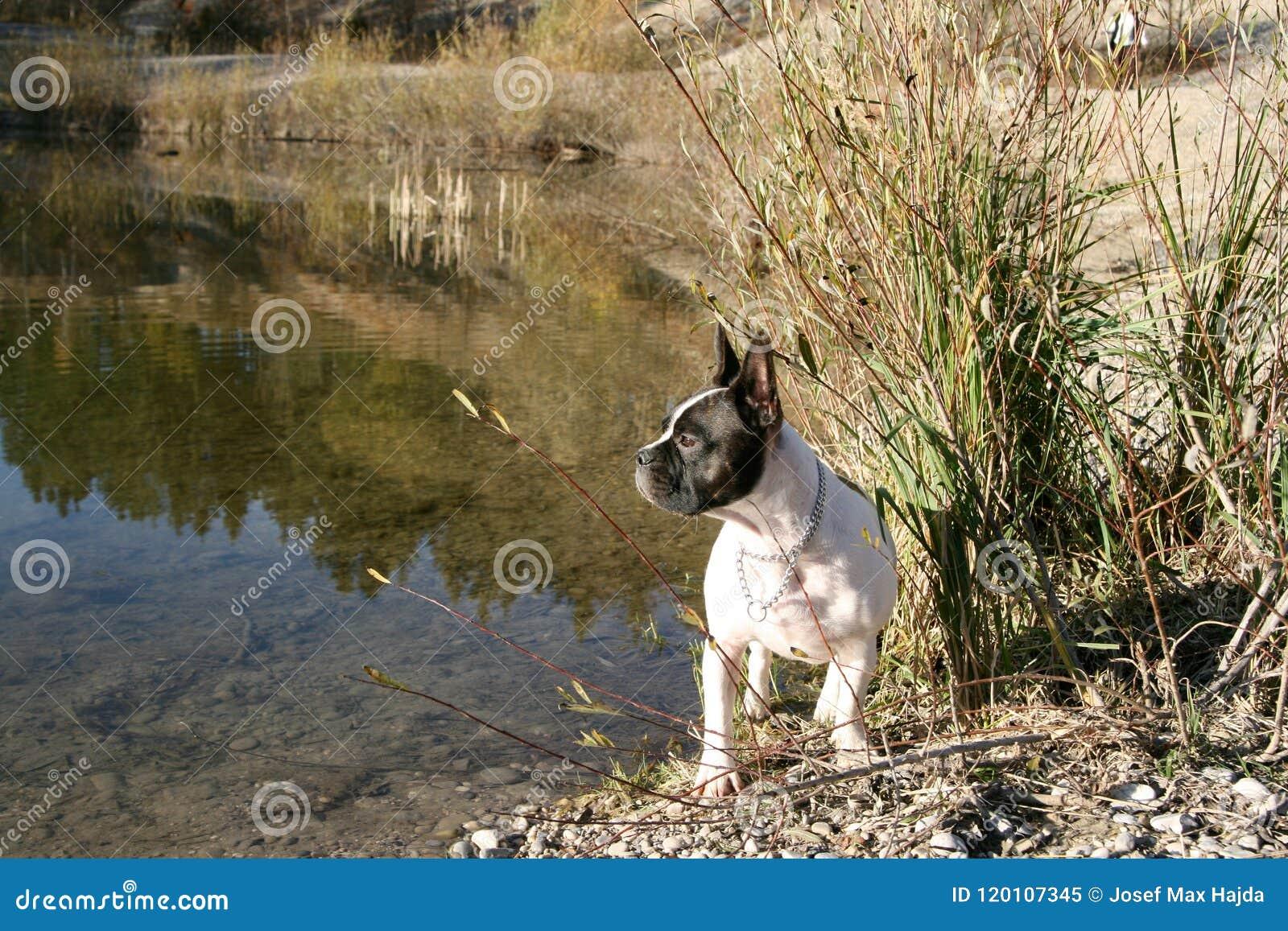Perro lateral del lago